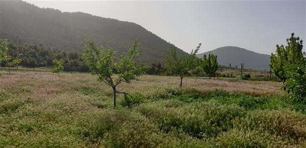YAYLA CEYLAN MAHALLESİ TARLA (2800 M²)